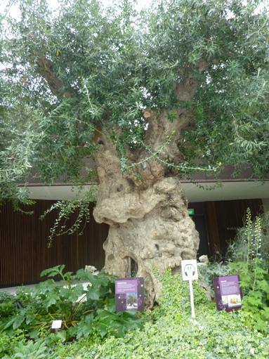 unik ya... tanda earphone untuk pengunjung yang menginginkan keterangan tentang pohon ini..