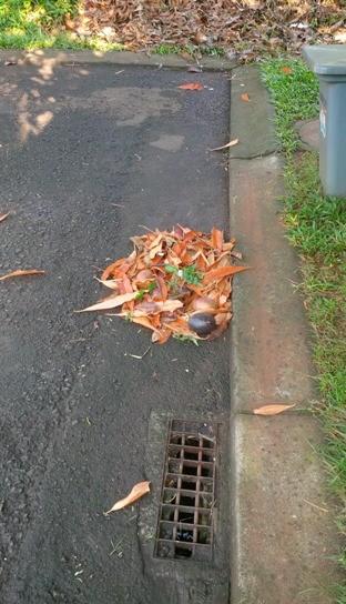contoh ngumpulin daun yang bak dan benar :D