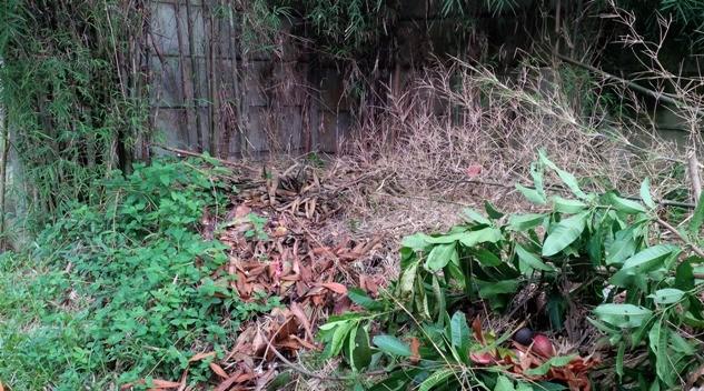 salah satu sudut, tumpukan puing bangunan ditumbuhi tanaman liar